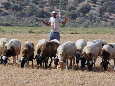 כולם חדשים חדשות - בארץ nrg - למה הבדואים בדקו את ה-DNA של הכבשים? CP-01